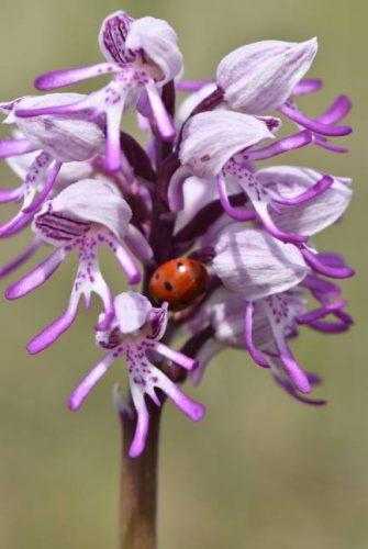 Biodiversité orchidée PDL