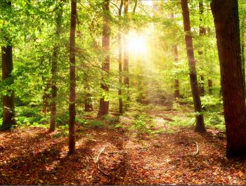 environnement forêt fsc - environnement